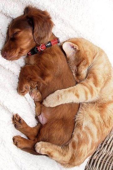Amor perros y gatos