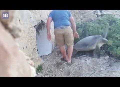 El emotivo vídeo de un turista en México salvando a una gran tortuga de morir boca arriba